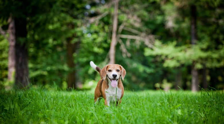 tips-for-dog-owners